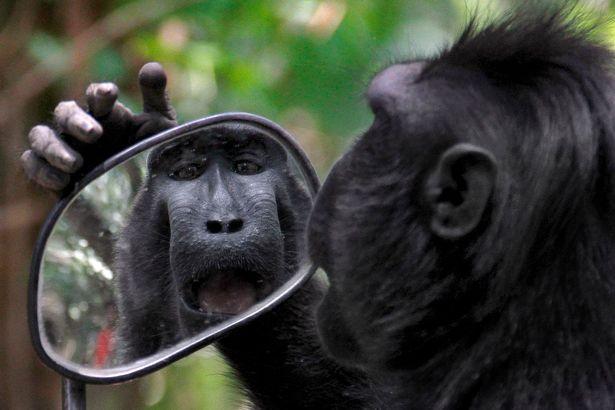 monkeymirror